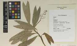 A globe-trotting botanist