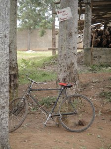 Bicycle propped up against a tree