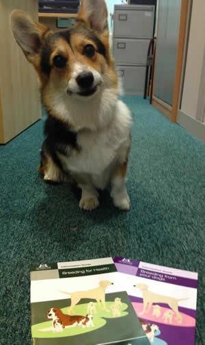 Corgi with Kennel Club pamphlets